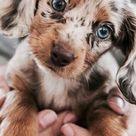 60 lustige pelzige Tiere, zum Ihres Tages zu erhellen   Tiere Blog cuteanimalhumor