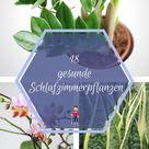 18 gesunde Schlafzimmerpflanzen