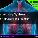 PPT - Respiratory System (INTRODUCTION) - Organs, Ventilation, Gas Exchange