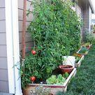 Gemüsebeet planen   Tipps für praktisch orientierte Gärtner   Archzine