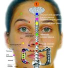 www.nmsportsmassage.com  Reflexology Body map - Face