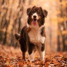 Autumn Leaves by Sensenfrau on DeviantArt