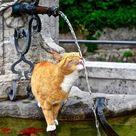 Cat Drinking