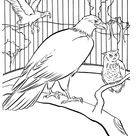 Zoo Birds Coloring Pages | Zoo Aviary bird cage Coloring Page and Kids Activity sheet