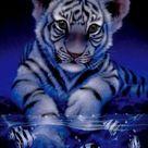 Tiger, Löwen