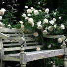 My Enchanting Cottage Garden