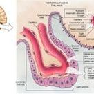 The Very Intelligent Choroid Plexus Epithelial Cell