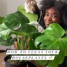 How to Clean Your House Plant Leaves
