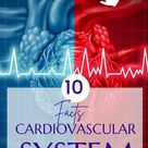 Nursing Cardiovascular System: 10 Facts About the Cardiovascular System