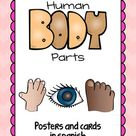 Human Body Parts Posters