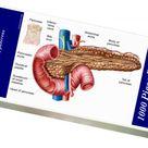 1000 Piece Puzzle. Anatomy of pancreas