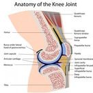 Diagram Of The Knee Joint