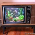 Beautiful fish tank ideas for Relaxing home » Engineering Basic