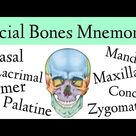 Facial Bones of the Skull Mnemonic [Anatomy Animation]