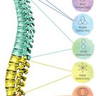 Spinal Flow Certification - Carli Axford