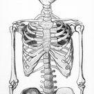 Skeleton Half by webfoe on DeviantArt
