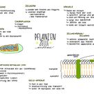 Biologie - IPad Notizen - Pflanzenzelle