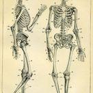 Skeleton gallery