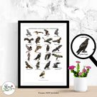British Birds of Prey Print Wild Birds Collection Home Decor Wall Art Owl Wildlife Illustration Sizes A4 or A3 Signed by Artist