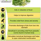 The health benefits of Wormwood Essential Oil can be attributed to its properties like anti helmitic, cholagogue, deodorant, digestive, emenagogue, febrifuge, insecticide, narcotic, vermifuge and tonic.