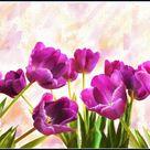 Tulip Study by brush4u on DeviantArt