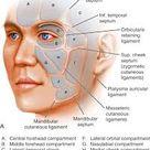 Applied Facial Anatomy
