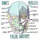 The Larynx - Blood and Nerve Provide #medschoollife #medicalstudent #medstudent #... Check mo...