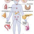 Pancreatitis & Popcorn