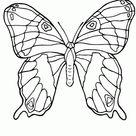 Gratis Dieren Vlinders Vlinder Kleurplaten Downloaden en Uitrpinten