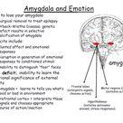 Amydala and Emotion