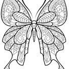 Kids-n-Fun   Kleurplaat Vlinders moeilijk Vlinders moeilijk