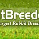 Rabbit Breeders Directory   USA Rabbit Breeders