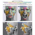 Anatomy of Facial Expression   PDF e book English