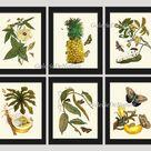 Botanical PRINT SET of 6 Fruits Wall Art Beautiful White   Etsy