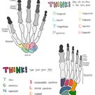 Bones of the Hands and Feet   Study Sheet