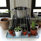 DIY Self-Watering System for Houseplants