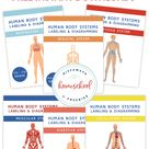 FREE Human Body Systems Labeling with Answer Sheets