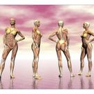 A1 Poster. Female muscular system from four points of view