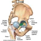 Hip Anatomy Yoga   Understanding the Hips for Yoga   Jason Crandell Yoga Method