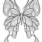 Ausmalbild Schmetterling kostenlos » Malvorlage Schmetterling