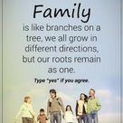 Quotes Family is like branches on a tree, we all grow in different directions   Quotes