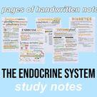 Biology Notes (Endocrine System)