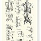 Box Canvas Print. Human Anatomy - Backbone including Ribs and