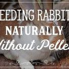 Feeding rabbits without pellets: Natural rabbit food ideas