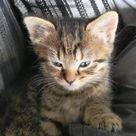 Kitty fighting the sleep