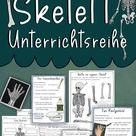 Skelett Unterrichtsreihe - Arbeitsblätter, Versuche, Bastelanleitungen, Forscherfragen