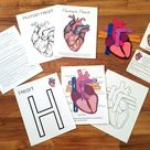 Human Heart Mini Unit Study