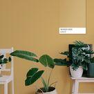 Moderne stilvolle Farben für das Zuhause