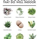 10 Types of Succulents That Do Well Indoor