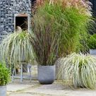 Pflanzen als Sichtschutz für die Terrasse im Kübel   Schöne Ideen
